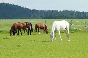 Pferdeweide beim Elsabauern