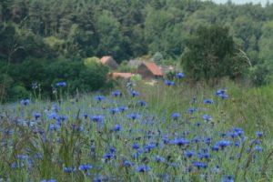 Blumendorf in Mittelfranken