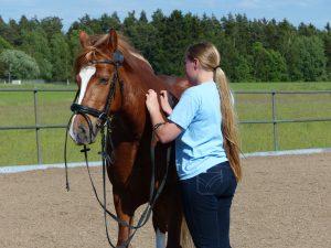 Pferdemassage Elli