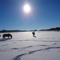 Pferde_Pruppach_2017_Januar